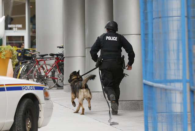 A Ottawa police officer and service dog run up Metcalfe Street following shootings in downtown Ottawa October 22, 2014. (Photo by Blair Gable/Reuters)