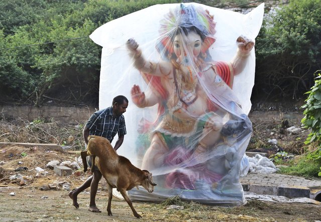 A trader pushes his goat past an idol of elephant-headed Hindu god Ganesha as he takes it to sell ahead of the Muslim festival of Eid al-Adha in Bangalore, India, Monday, September 12, 2016. Eid al-Adha, or the festival of sacrifice, is celebrated by Muslims around the world to commemorate Prophet Ibrahim's test of faith. During the Eid, Muslims slaughter livestock and distribute the meat to the poor. (Photo by Aijaz Rahi/AP Photo)