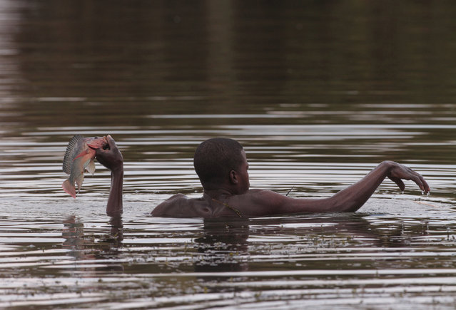 In this photo taken Wednesday October 29, 2014, a fisherman catches a fish near the shores of Lake Chivero, west of Harare. (Photo by Tsvangirayi Mukwazhi/AP Photo)