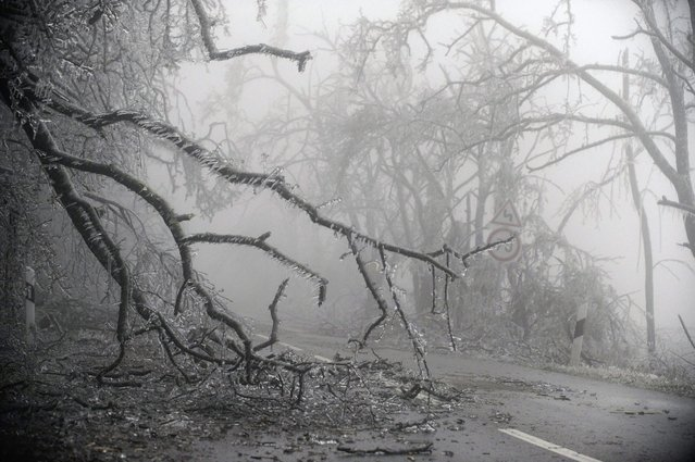 Ice-covered branches on the road after falling due being weighed down by ice near Mogyorod, 23 kms north-east of Budapest, Hungary, 02 December 2014. (Photo by Zoltan Mihadak/EPA)
