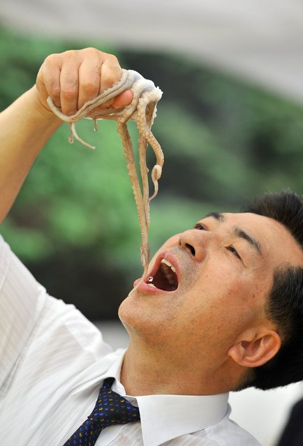 A South Korean man eats a live octopus during an event to promote a local food festival in Seoul on September 12, 2013. (Photo by Jung Yeon-Je/AFP Photo)