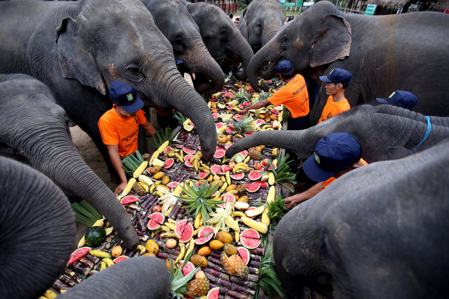 Elephant keepers feed elephants with different kinds of fruits and vegetables at the Wingabaw Elephant Camp in Bago Region, Myanmar on World Elephant Day on August 12, 2018. (Photo by Xinhua News Agency/Rex Features/Shutterstock)