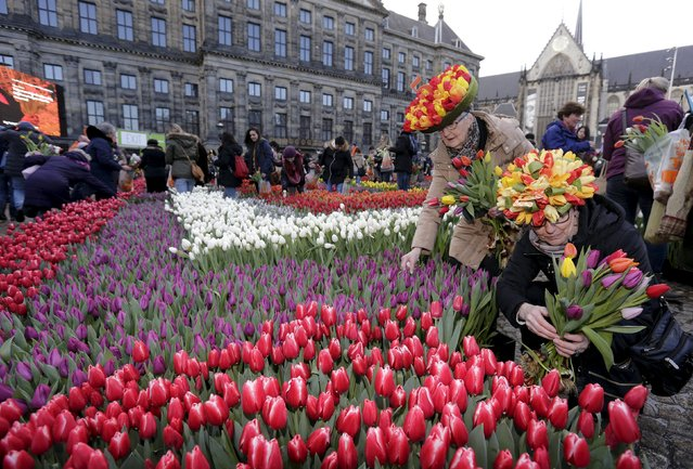 Coby (R) and Thea Beutler from Amstelveen pick tulips that were placed in front of the Royal Palace at the Dam Square to celebrate the beginning of the tulip season in Amsterdam, the Netherlands January 16, 2016. (Photo by Michael Kooren/Reuters)