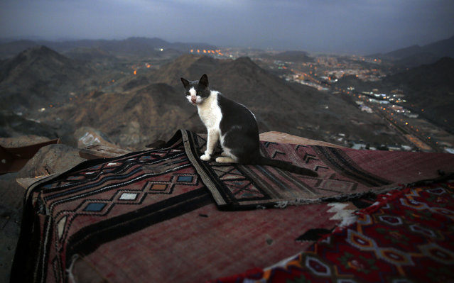 A cat looks on top of Mount Al-Noor in the holy city of Mecca, Saudi Arabia January 16, 2016. (Photo by Amr Abdallah Dalsh/Reuters)