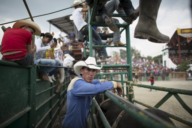 Cowboy Ariel Peralta (C), 25, watches a rodeo show at the International Livestock Fair in Havana March 22, 2015. (Photo by Alexandre Meneghini/Reuters)