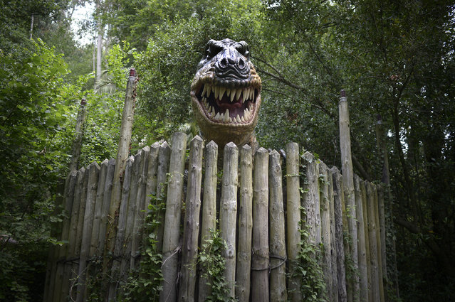 A life sized model of a Tyrannosaurus Rex baring its teeth is seen at the Karpin Abentura park in the Karrantza valley, Spain, July 26, 2014. (Photo by Vincent West/Reuters)