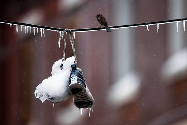 A bird perches next to ice covered sneakers hanging from utility lines after a winter storm Wednesday, February 5, 2014, in Philadelphia. Icy conditions have knocked out power to more than 200,000 electric customers in southeastern Pennsylvania and prompted school and legislative delays as well as speed reductions on major roadways. (Photo by Matt Rourke/AP Photo)