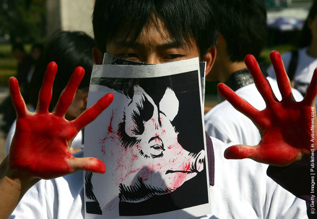 A student acts as a slaughtered pig during a performance art activity to promote animal protection