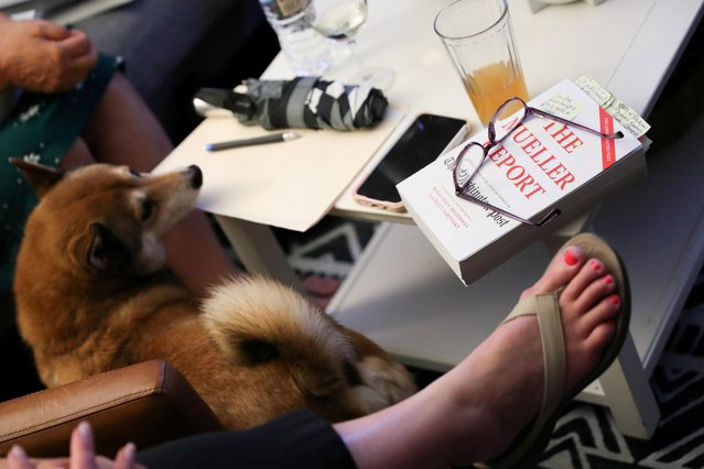 "Book club member Sharon Wunder's dog walks past her copy of the Mueller Report as she joins other book club members, who found one another through the action network ""Herndon-Reston Indivisible"", to discuss the Mueller Report over snacks at her home in Herndon, Virginia, U.S. July 24, 2019. The dark cloud of investigations and impeachment has threatened President Donald Trump for many months, with Democrats in the U.S. House of Representatives, where any such effort to remove Trump from office would begin, divided about whether to proceed. (Photo by Jonathan Ernst/Reuters)"