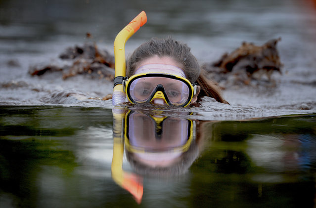 A female entrant takes part in the Irish Bog Snorkelling championship this afternoon at Peatlands Park on July 27, 2014 in Dungannon, Northern Ireland. The annual event sees male and female competitors swim the 60m length of the bog watched by scores of spectators and takes place on International Bog Day. (Photo by Charles McQuillan/Getty Images)
