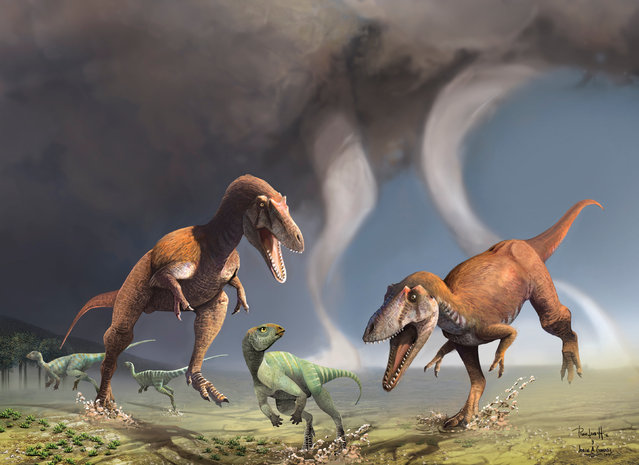 This illustration shows two Cretaceous Period predatory dinosaurs named Gualicho shinyae hunting smaller bipedal herbivorous dinosaurs in northern Patagonia 90 million years ago. Scientists on July 13, 2016 described fossils of Gualicho unearthed in Argentina, showing that the two-legged carnivore had arms only about the length of a human child's even though its body was up to about 26 feet (8 meters) long. (Photo by Courtesy Jorge Gonzalez and Pablo Lara/Reuters)