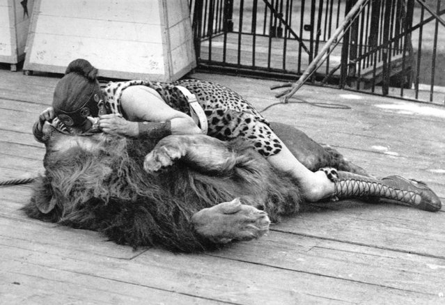 A woman circus performer, dressed in a leopard skin gladiator costume, places her head in a lion's mouth, 1900.