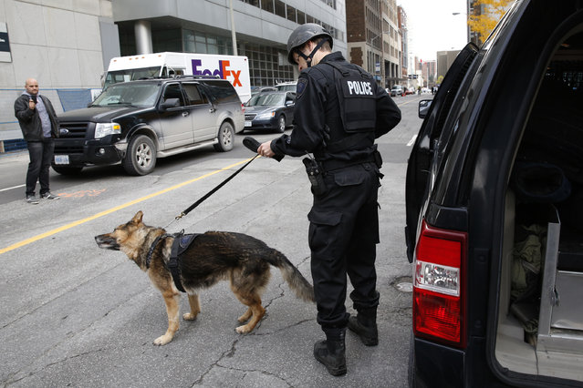 A Ottawa police officer prepares a service dog following shooting incidents in downtown Ottawa October 22, 2014. (Photo by Blair Gable/Reuters)