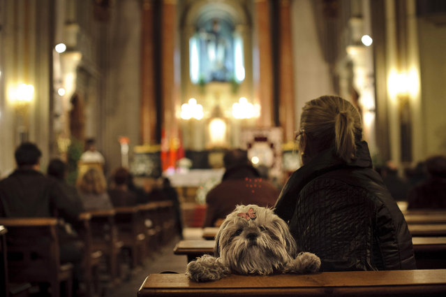 A dog looks over the back of a pew as people take part in a mass at San Anton Church in Madrid, Thursday, January 17, 2013, in honor of Saint Anthony, the patron saint of animals. The feast is celebrated each year in many parts of Spain and people bring their pets to churches to be blessed. (Photo by Daniel Ochoa de Olza/AP Photo)