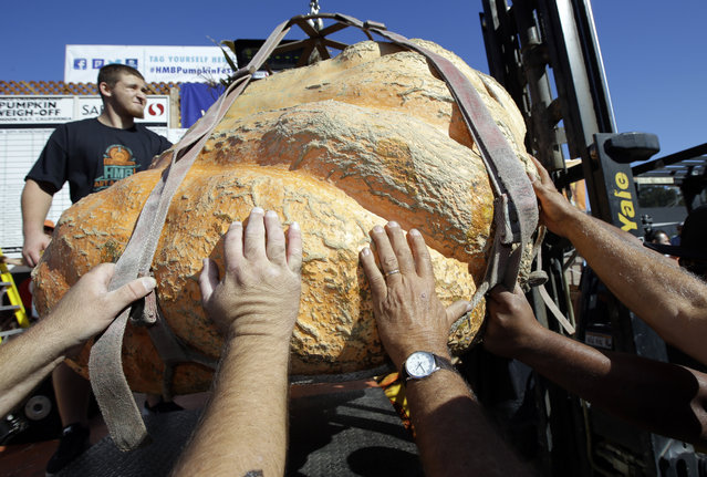 A giant pumpkin is placed on the scale at the Annual Safeway World Championship Pumpkin Weigh-Off Monday, October 12, 2015, in Half Moon Bay, Calif. (Photo by Marcio Jose Sanchez/AP Photo)
