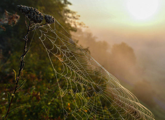 A spider's web moistened by morning mist glitters in the light of the risintg sun near Lebus, Germany, 19 August 2016 morning. (Photo by Patrick Pleul/EPA)