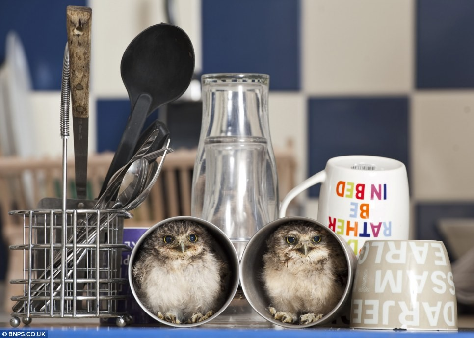 Orphaned Baby Owls Get New Home