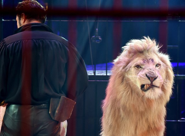 "Martin Lacey Jr. with a lion during the premiere of the Circus Krone program ""Circus der Preistraeger"" at Circus Krone on February 2, 2016 in Munich, Germany. (Photo by Hannes Magerstaedt/Getty Images)"
