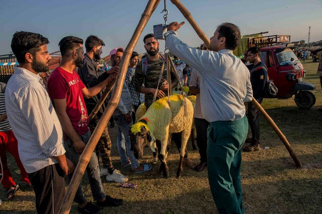 A sheep is weighed at a market ahead of Eid al-Adha festival in Srinagar, Indian controlled Kashmir, Friday, July 16, 2021. Eid al-Adha is a religious festival celebrated by Muslims worldwide to commemorate the willingness of Prophet Ibrahim to sacrifice his son as an act of obedience to God. (Photo by Dar Yasin/AP Photo)