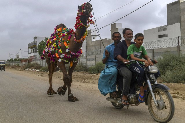 People take home sacrificial animals after purchasing it at a cattle market ahead of the Muslim festival of Eid al-Adha in Karachi on July 19, 2021. (Photo by Asif Hassan/AFP Photo)