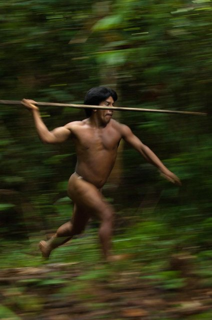 The tribesmen also hunt jungle creatures using spears. (Photo by Pete Oxford/Mediadrumworld.com)
