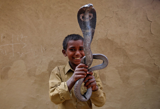 Ravi Nath poses for a photograph with a cobra snake in Jogi Dera (Snake charmers settlement), in the village of Baghpur, in the central state of Uttar Pradesh, India November 10, 2016. (Photo by Adnan Abidi/Reuters)