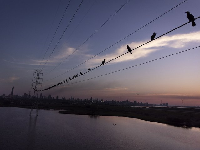 Neotropic cormorants roost on a high voltage cable at sunset near the Paraguay River, in Asuncion, Paraguay, Saturday, August 14, 2021. (Photo by Jorge Saenz/AP Photo)