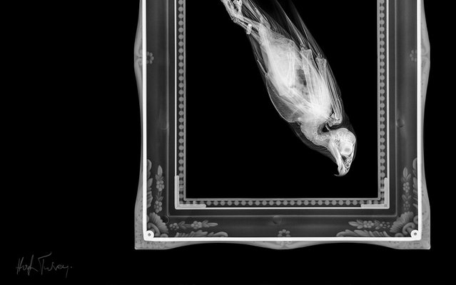 An x-ray of a bird in a painting, taken by British artist and photographer Hugh Turvey in London, England. (Photo by Hugh Turvey/SPL/Barcroft Media)