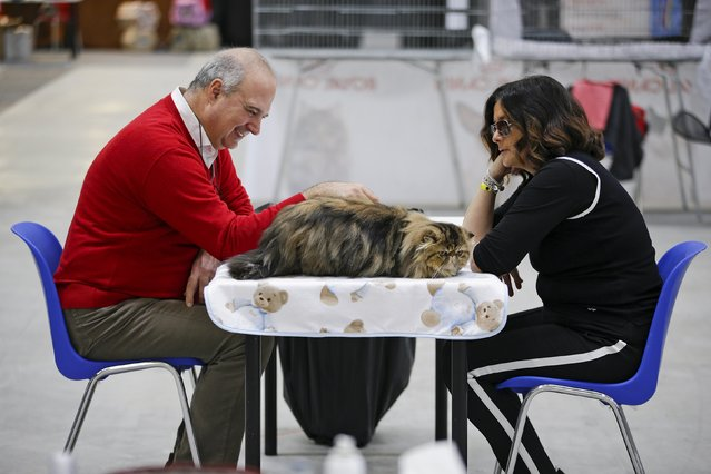Participants are seen during the Mediterranean Winner 2016 cat show in Rome, Italy, April 3, 2016. (Photo by Max Rossi/Reuters)