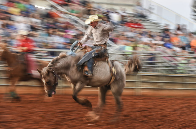 A rider competes in the Bareback Bronc competition, Monday, June 29, 2015, during the Broken Horn Rodeo at the Lincoln County Fair near Stanford, Ky. (Photo by Clay Jackson/The Advocate-Messenger via AP Photo)