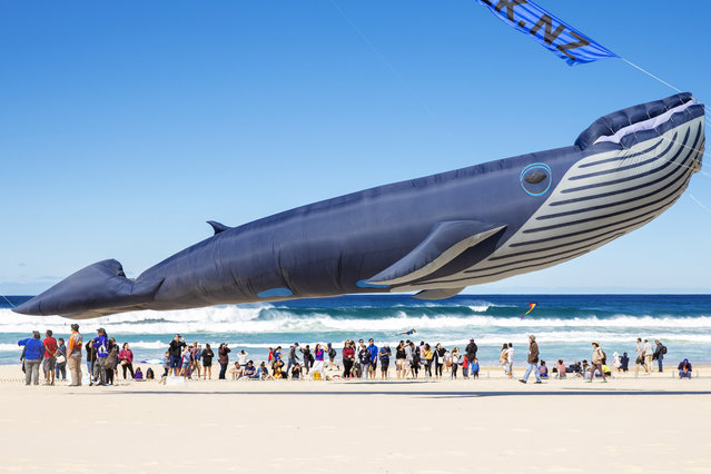 A kite in the shape of a whale is seen during the Festival of the Winds in Bondi on September 08, 2019 in Sydney, Australia. Festival of the Winds is Australia's largest kite festival. (Photo by Jenny Evans/Getty Images)
