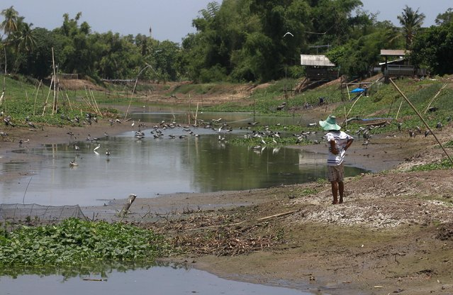 A villager watches a dry canal in Suphan Buri province, west of Bangkok, Thailand July 10, 2015. In Thailand's central province of Suphan Buri farmers are becoming increasingly desperate for water to irrigate their parched fields as the rice-producing nation suffers its worst drought in more than a decade. (Photo by Chaiwat Subprasom/Reuters)