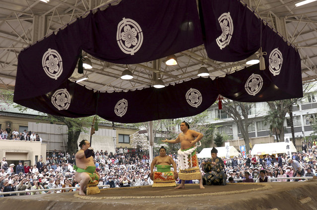 Mongolian sumo grand champion Harumafuji, second from right, performs his ring entry form before the start of the ritual sumo bouts held at the Yasukuni Shrine in Tokyo, Monday, April 17, 2017. (Photo by Shizuo Kambayashi/AP Photo)
