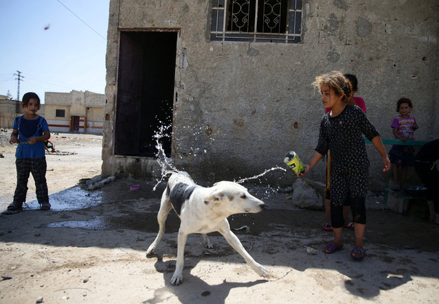 A girl pours water over a dog to cool it down, in the rebel held besieged town of Douma, eastern Damascus suburb of Ghouta, Syria, June 23, 2016. (Photo by Bassam Khabieh/Reuters)