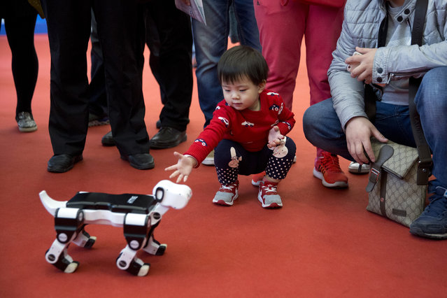 A child reaches out to a robotic dog displayed at the World Robot Conference in Beijing, China, Friday, October 21, 2016. The conference showcased China's burgeoning robot industry as the nation seeks to increase the use of robots in its manufacturing and service industries. (Photo by Ng Han Guan/AP Photo)