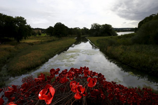 """A view of a poppies installation titled """"Wave"""" by Paul Cummins at Yorkshire Sculpture Park near Wakefield, Britain September 3, 2015. (Photo by Darren Staples/Reuters)"""