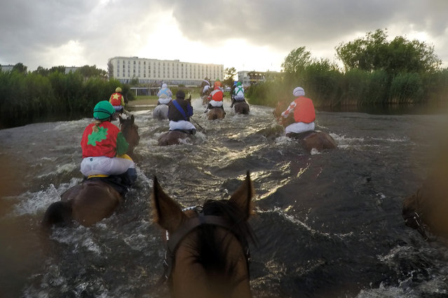 The Pavel Vovcenko-trained Falconettei has won one of the highlights of the German racing season, the Alpine Motorenöl-Seejagdrennen lake race at Hamburg on Tuesday, July 5, 2016. A type of steeplechase unique to Germany in which horses have to swim through a lake as part of the course, Falconettei and jockey Cevin Chan came home unchallenged. A field of 13 runners took part, one of the biggest ever fields assembled for a lake race, and all 13 negotiated the lake successfully. (Photo by Frank Sorge/Rex Features/Shutterstock)