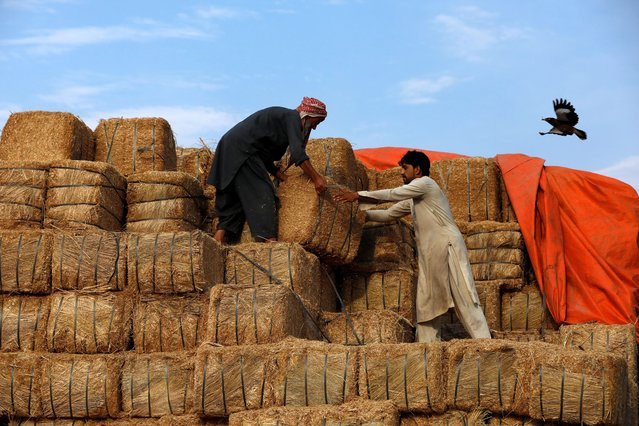 Laborers unload bundles of fodder from a truck outside a cattle market, as the spread of the coronavirus disease (COVID-19) continues, in Peshawar, Pakistan on July 17, 2020. (Photo by Fayaz Aziz/Reuters)