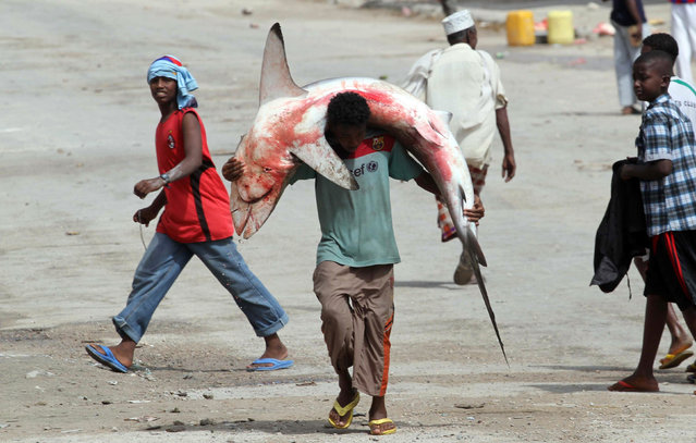 A fisherman carries a swordfish on his head and shoulders from the Indian Ocean waters to the market in Somalia's capital Mogadishu December 18, 2012. (Photo by Ismail Taxta/Reuters)