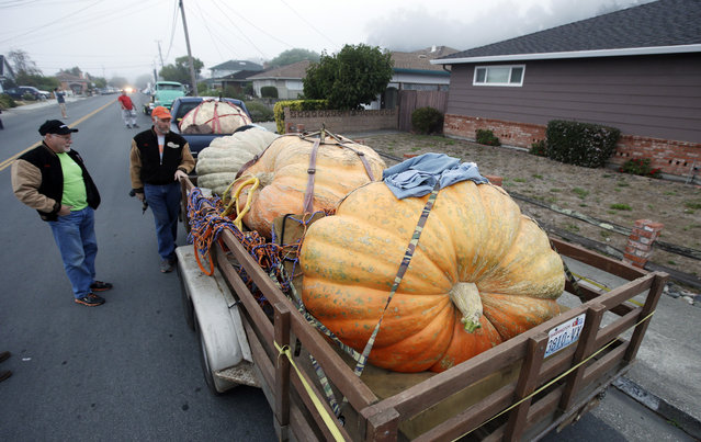 Jack La Rue, left, of Tenino, Wash. and Jim Sherwood of Mulino, Ore., arrive with their giant pumpkins to participate in the Annual Safeway World Championship Pumpkin Weigh-Off, Monday, October 12, 2015, in Half Moon Bay, Calif. (Photo by Marcio Jose Sanchez/AP Photo)