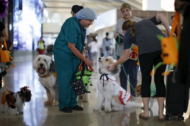 Therapy dogs and their owners wear Halloween costumes as part of a program to de-stress passengers at the international boarding gate area of LAX airport in Los Angeles, California, United States, October 27, 2015. (Photo by Lucy Nicholson/Reuters)