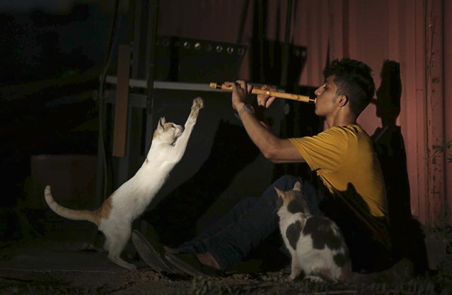 A youth plays the oboe (flute) near cats in Jeddah December 12, 2014. The oboe, or mizmar in Arabic, is a widely used musical instrument in Saudi Arabia. (Photo by Mohamed Al Hwaity/Reuters)