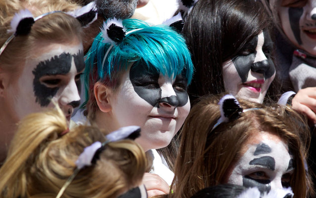 Protesters against a govenment proposal for the culling of badgers gather outside the Department for Environment, Food and Rural Affairs (DEFRA) in central London on May 1, 2013. Britain is set to cull up to 5,000 badgers in a bid to combat tuberculosis in cattle which has outraged animal welfare groups, after two pilot schemes were given the green light in February. (Photo by Andrew Cowie/AFP Photo)