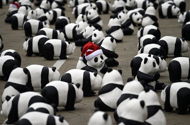 Some of the 1,600 papier-mache pandas are displayed at Independence Square in Kuala Lumpur on December 21, 2014 as part of their first appearance in the city. The event, consisting of placing 1,600 papier-mache pandas in various cities around the world, was created by French artist Paulo Grangeon in collaboration with the WWF and is aimed at raising awareness of the endangered species. (Photo by Manan Vatsyayana/AFP Photo)