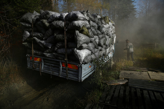 Charcoal burner Zbigniew stands near a truck loaded with sacks of charcoal at a charcoal making site in the forest of Bieszczady Mountains, near Baligrod village, Poland October 28, 2016. (Photo by Kacper Pempel/Reuters)
