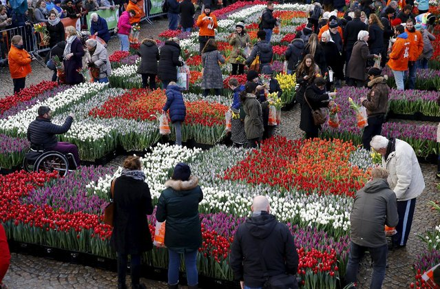 People pick tulips that were placed in front of the Royal Palace at the Dam Square to celebrate the beginning of the tulip season in Amsterdam, the Netherlands January 16, 2016. (Photo by Michael Kooren/Reuters)