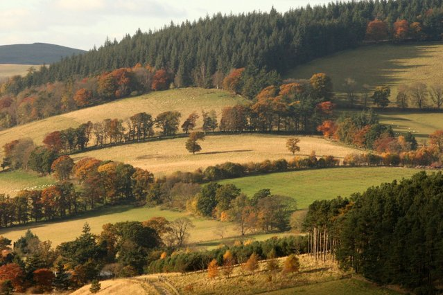 The Autumn light shines on the trees and fields in the Scottish Borders. (Photo by David Cheskin/PA Wire)