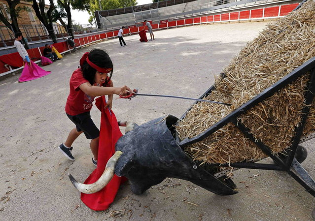Nino, a ten-year-old toreador apprentice of the French Tauromachy Centre, nicknamed El Nino, holds a sword as he prepares to strike a practice bull during a course at the bullring of Garons, near Nimes, September 25, 2013. Since 1983, the French Tauromachy Centre in Nimes has trained some 1,000 youths in the art of bullfighting. Twenty of them have gone on to become professional matadors, facing fighting bulls in the arena. Twice a week, students take courses with a matador to learn the movements and gestures of the bullfighter in the ring, but without an animal present. Students train with calves in the surrounding fields during spring, and regularly participate in beginner's bullfights (becerradas) without killing calves. Solal has been taking courses for three years and Nino, for just a year now. Both are normally enrolled in French public schools, but have one thought in mind – bullfighting. They share a passion linked to the city of Nimes, famous for its ferias and bullring. (Photo by Jean-Paul Pelissier/Reuters)