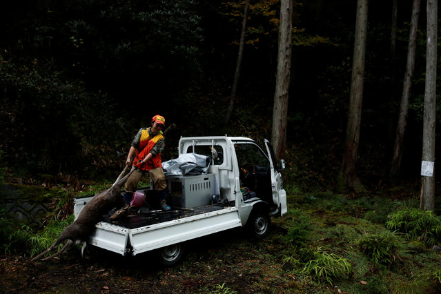 Hunter Chiaki Kodama loads a deer she shot onto her truck in a forest outside Oi, Fukui Prefecture, Japan, November 17, 2016. (Photo by Thomas Peter/Reuters)