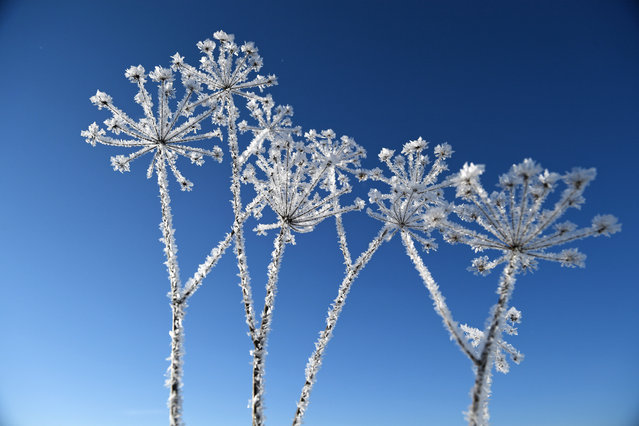 A frost covered plants at the Lutowiska village, Bieszczady mountains, south-east Poland, 01 December 2018. Last night, in some places in the region, temperatures dropped to minus 18 degrees Celsius. (Photo by Darek Delmanowicz/EPA/EFE)